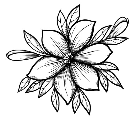 Beautiful graphic drawing Lily branch with leaves and buds of the flowers  Many similarities to the author Stock Vector - 25041950