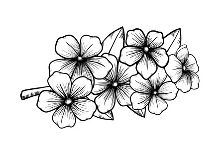 woodcut: branch of a blossoming tree in graphic black white style, drawing by hand  Symbol of spring