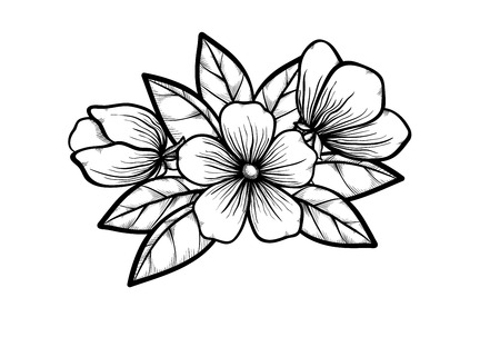 white greeting: branch of a blossoming tree in graphic black white style, drawing by hand. Symbol of spring