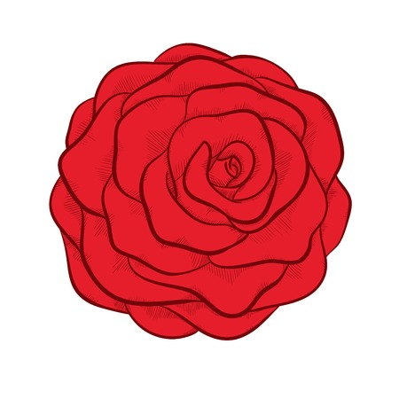 beautiful red rose isolated in graphic style Vector