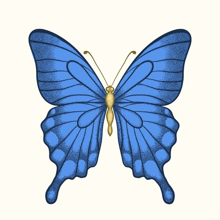 beautiful butterfly in pastel colors in graphic style Vector