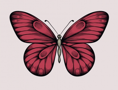 beautiful butterfly in vintage style  Hand-drawn contour lines and strokes  Vector
