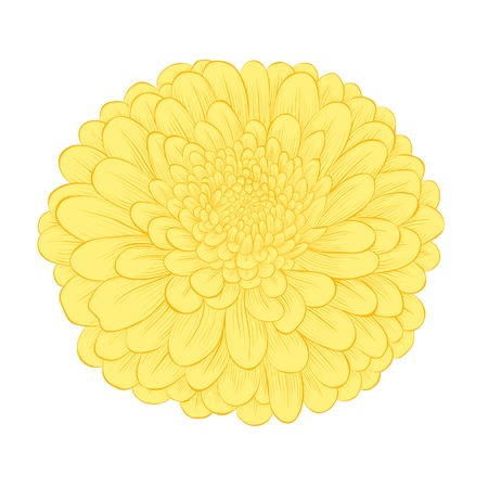 beautiful yellow flower isolated on white background Vector
