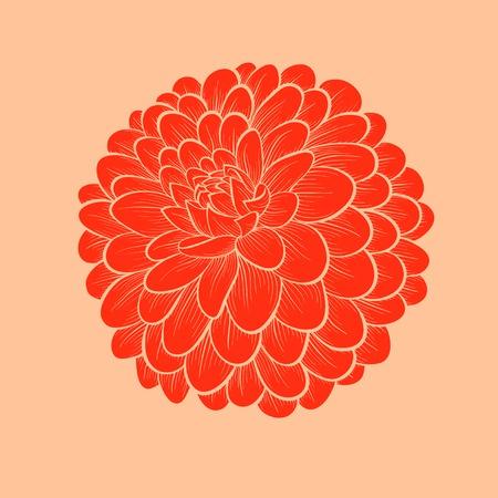 dalia: hermosas de la dalia flores dibujadas en contornos y líneas de estilo gráfico, aislado en fondo