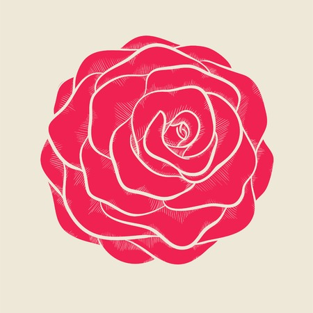 beautiful pink rose in a hand-drawn graphic style in vintage colors Vector