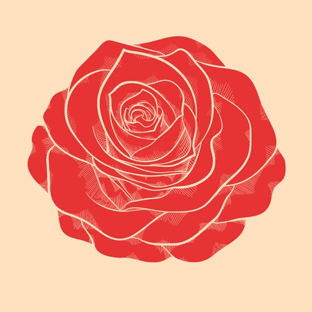 beautiful red rose in a hand-drawn graphic style in vintage colors Illustration