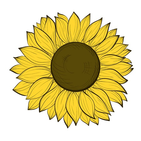beautiful sunflower isolated on a white background. Hand-drawn contour lines and strokes. Vector