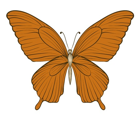 beautiful vintage butterfly isolated on white background. Hand-drawn contour lines and strokes. Vector