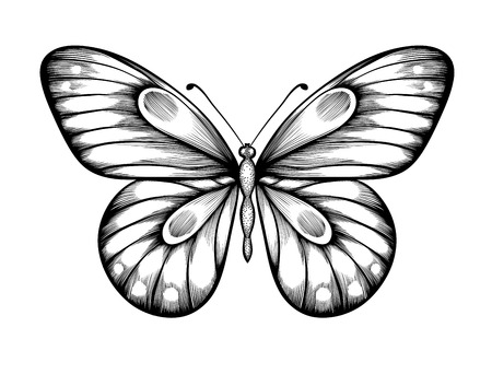 beautiful black and white butterfly. Hand-drawn contour lines and strokes. Vector