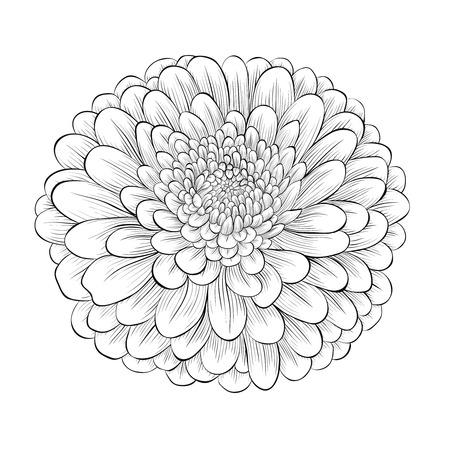 달리아: 아름다운 흑백 검정과 흰색 꽃 흰색 배경에 고립입니다. 손으로 그린 윤곽선과 뇌졸중. 일러스트