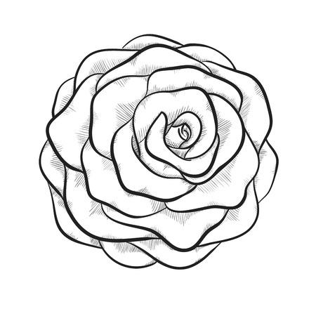 rose blanche: beau noir et blanc monochrome rose isol� sur fond blanc. Lignes et des traits de contour dessin� � la main.