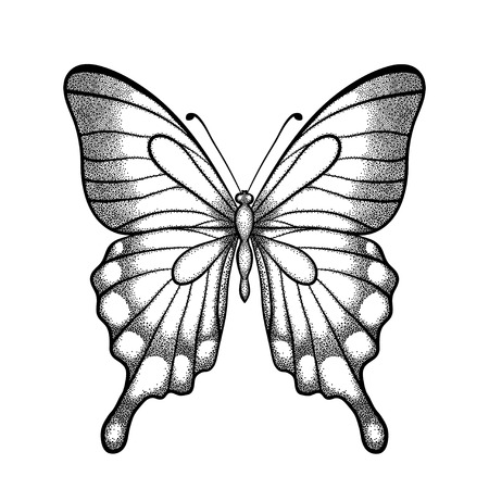 one isolated: graphic black and white butterfly. Hand-drawn contour lines and strokes. one isolated on white Illustration