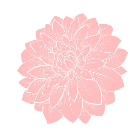 beautiful dahlia flower isolated on white . Hand-drawn contour lines and strokes. Perfect for background greeting cards and invitations to the day of the wedding, birthday and Valentines Day Vector