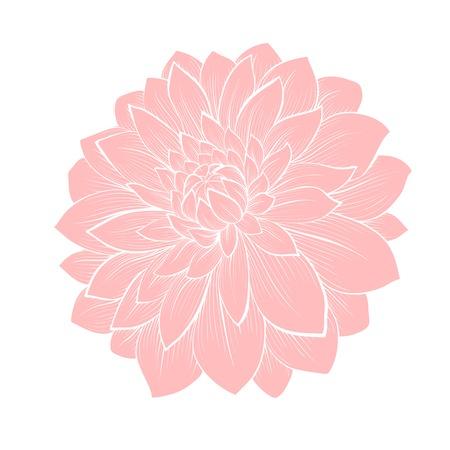 dalia: hermosa flor de la dalia aislado en blanco. Curvas de nivel dibujadas a mano y accidentes cerebrovasculares. Perfecto para las tarjetas de felicitación de fondo y las invitaciones para el día de la boda, el cumpleaños y el Día de San Valentín