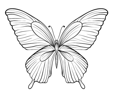 white greeting: graphic black and white butterfly. Hand-drawn contour lines and strokes. one isolated on white Illustration