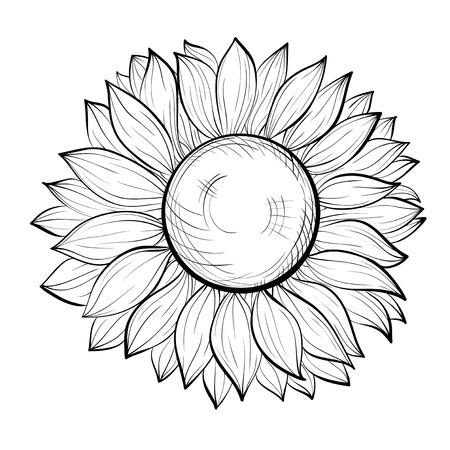 sunflower isolated: bella girasole bianco e nero isolato su sfondo bianco. Linee di contorno disegnati a mano e ictus. Sfondo perfetto per biglietti di auguri e inviti per il giorno del matrimonio, compleanno e San Valentino