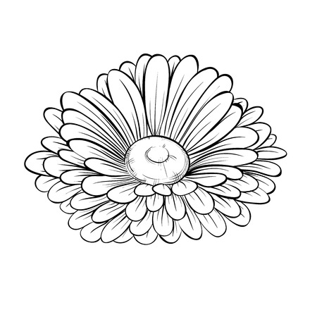 beautiful monochrome black and white daisy flower isolated on white.  Hand-drawn contour lines and strokes.
