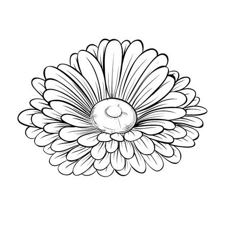 mooie zwart-wit zwart en wit daisy bloem geïsoleerd op wit. Handgetekende contourlijnen en beroertes.