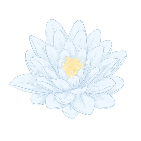 Beautiful lotus flower painted in graphic style isolated on white background Vector