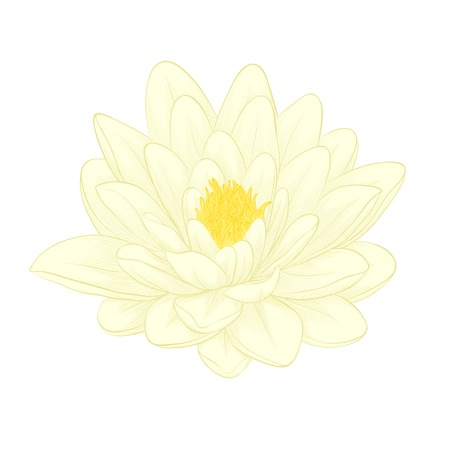 Beautiful lotus flower painted in graphic style isolated on white background Ilustração