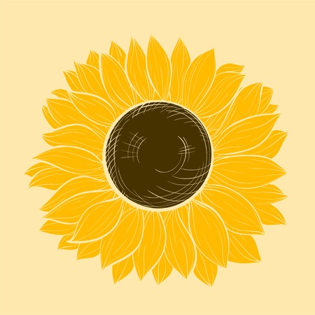 sunflower isolated: hermoso girasol aislado en un fondo blanco. Vectores