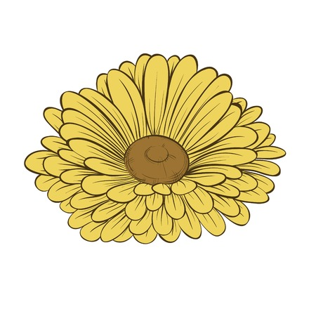beautiful daisy flower isolated on white background  Hand-drawn contour lines and strokes  Vector