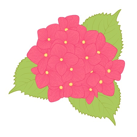 beautiful flower hydrangea isolated on white background   Hand-drawn contour lines and strokes  Vector