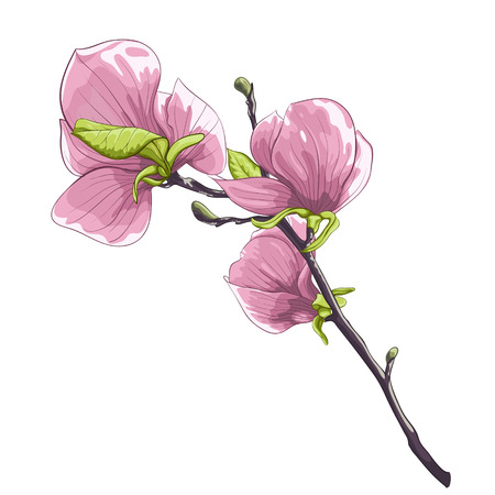 beautiful isolated twig blossoming magnolia tree Vector