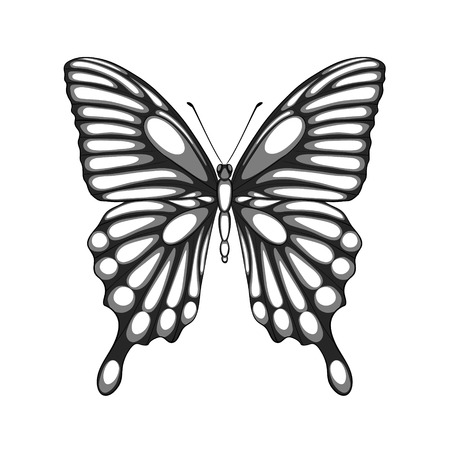 beautiful black and white butterfly  with watercolor effect  Perfect for background greeting cards and invitations of the wedding, birthday, Valentine s Day Vector