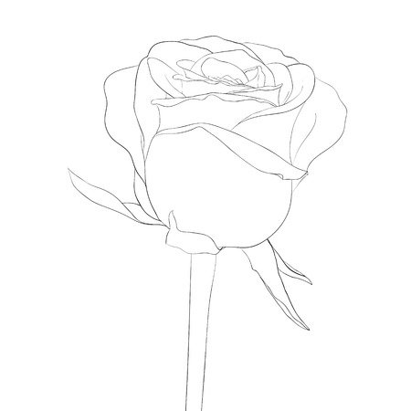 single line: beautiful monochrome, black and white rose bud with stem. flower isolated. Hand-drawn contour lines and strokes.