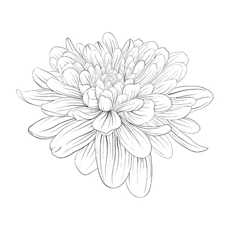 beautiful monochrome black and white dahlia flower isolated on white background. Hand-drawn contour lines and strokes. Vettoriali