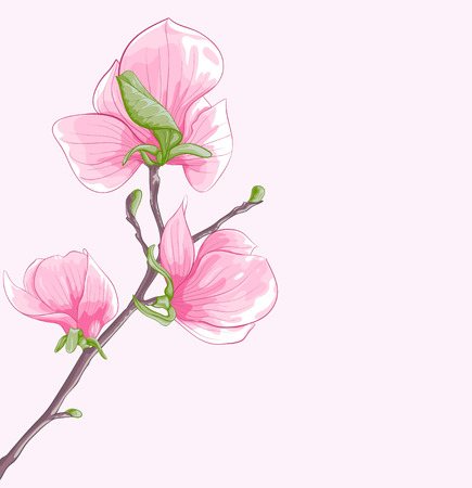 beautiful background with twig blossoming magnolia tree. Hand-drawn with effect of drawing in watercolor.  Vector