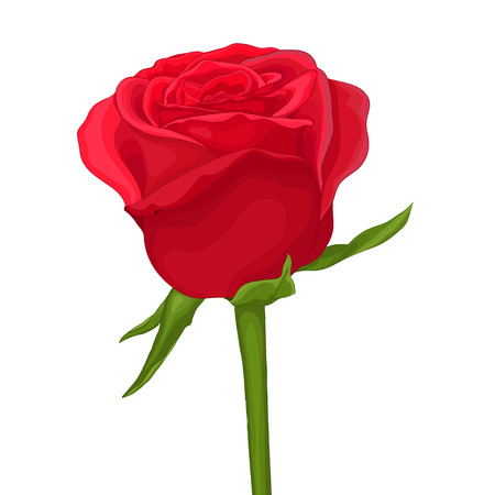 beautiful red rose isolated on white. with watercolor effect. Hand-drawn with effect of drawing in watercolor.  Vector