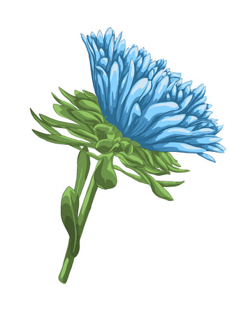 aster: beautiful bright blue aster with watercolor effect isolated on white background.