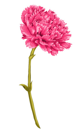 Beautiful pink carnation with the effect of a watercolor drawing isolated on white background.