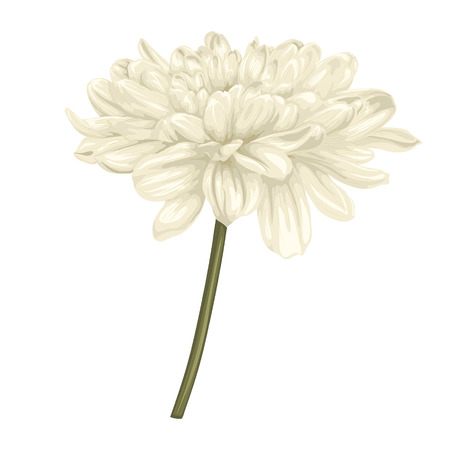 nature one painted: beautiful beige dahlia with stem isolated on white background.