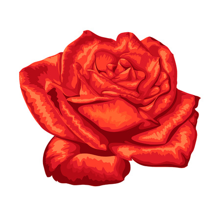 beautiful red rose with the effect of a watercolor drawing isolated on white background. Vector