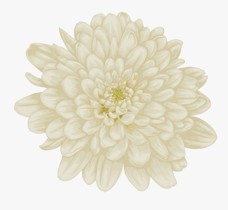 nature one painted: beautiful beige dahlia isolated on white. Hand-drawn with effect of drawing in watercolor Illustration
