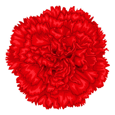 Beautiful red carnation isolated on white background. Hand-drawn with effect of drawing in watercolor