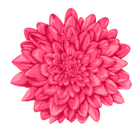 beautiful pink dahlia with the effect of a watercolor drawing isolated on white background. Vector