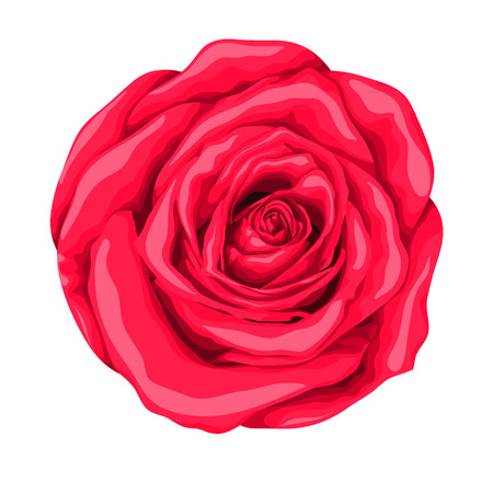 beautiful red rose with the effect of a watercolor drawing isolated on white background. Illustration