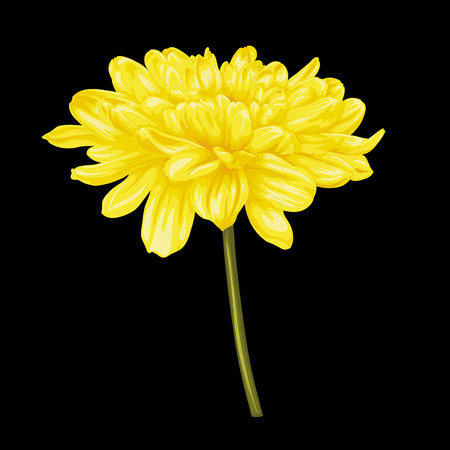 hand painted: beautiful yellow dahlia with the effect of a watercolor drawing isolated on black background.
