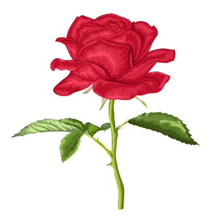 beautiful red rose with long stem and leaves with the effect of a watercolor drawing isolated on white background. Illustration