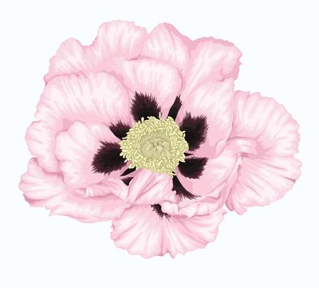 peony tree: Bella pianta Paeonia arborea (Albero peonia) fiore bianco isolato su bianco. Disegnati a mano con effetto di disegno ad acquerello Vettoriali