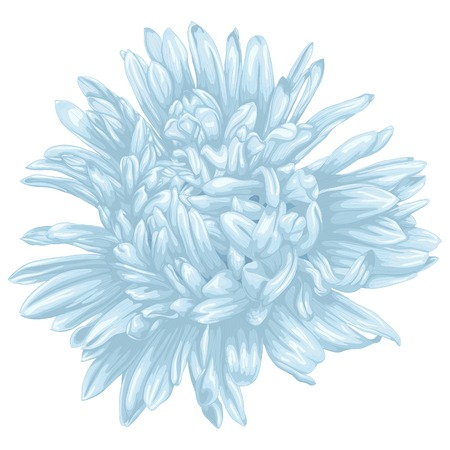 aster: Beautiful blue aster isolated on white background . Hand-drawn with effect of drawing in watercolor