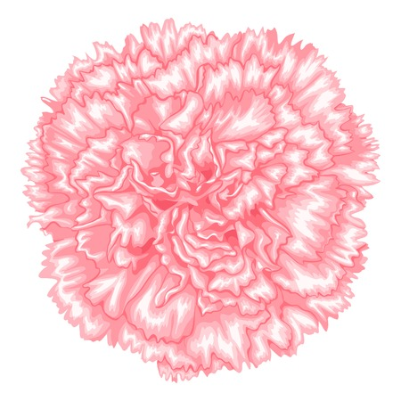 Beautiful pink carnation isolated on white background. Hand-drawn with effect of drawing in watercolor
