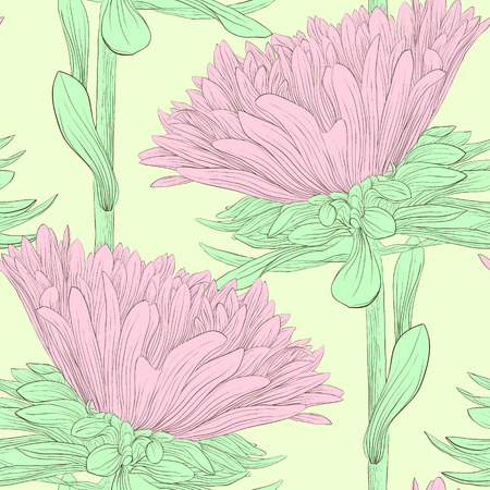 aster: Beautiful pink flowers aster. Hand-drawn contour lines and strokes.