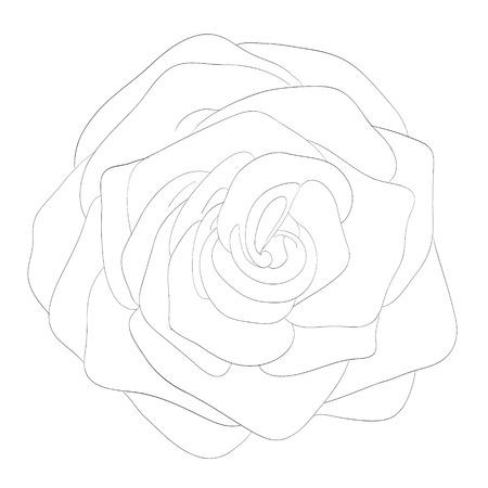 rose blanche: Belle noir et blanc monochrome rose, isol� sur fond blanc. Lignes de contour et coups dessin�e � la main.