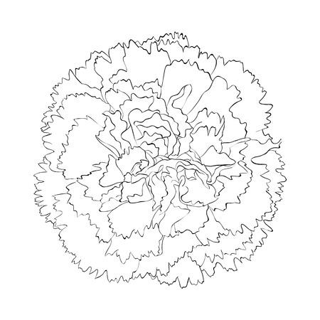 아름다운 흑백 검은 색과 흰색 배경에 고립 된 흰색 카네이션 꽃. 손으로 그린 등고선과 스트로크