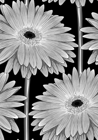 Beautiful monochrome, black and white seamless background with gerbera flower with a stem. Hand-drawn contour lines and strokes with effect of drawing in watercolor Vector